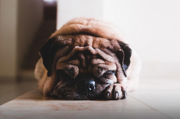 Flooring for dog