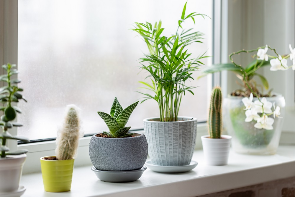 Plants can improve plain surfaces such as windowsills.