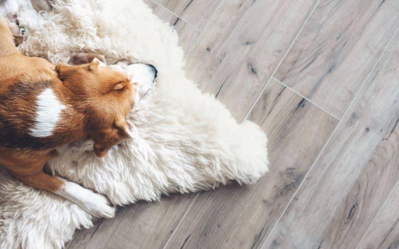 Laminate flooring is scratch-resistant which makes it a great choice for households with active pets.