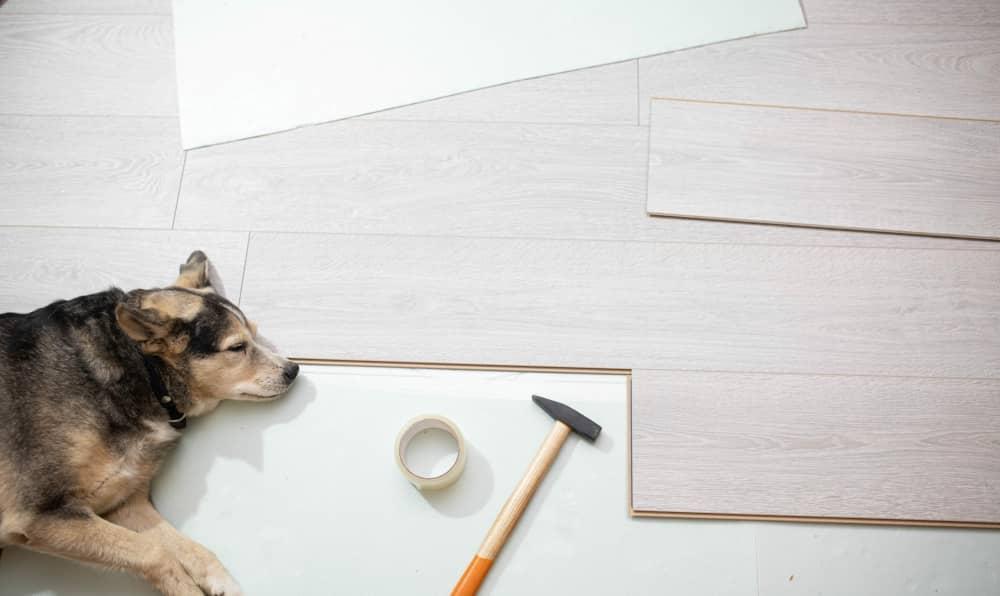 Dog lying on newly installed floor.
